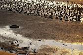 Mud land along the coast — Stock Photo