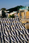 Salted fishes under sunshine in Hong Kong — Stok fotoğraf