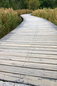 Path in wetland — Stock Photo