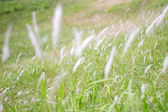 Moving grasses on the ground — Stock Photo