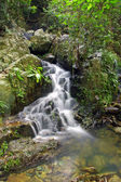 Water stream in forest — Stock Photo