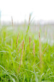 Moving grasses background — Stock Photo
