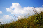 Green grasses and blue sky — Stock fotografie