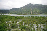 Wetland in Hong Kong coast — Stock Photo