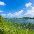 Wetland lake landscape — Stock Photo #9828755