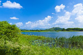Wetland lake landscape — Stock Photo