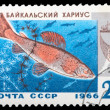 Postage Stamp — Stock Photo #8333628