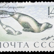 Postage Stamp — Stock Photo #8333648