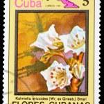 Postage Stamp — Stock Photo #8333984