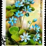 Postage Stamp — Stock Photo #8334159