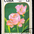 Postage Stamp — Stock Photo #8334293