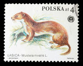 Postage Stamp — Stock Photo