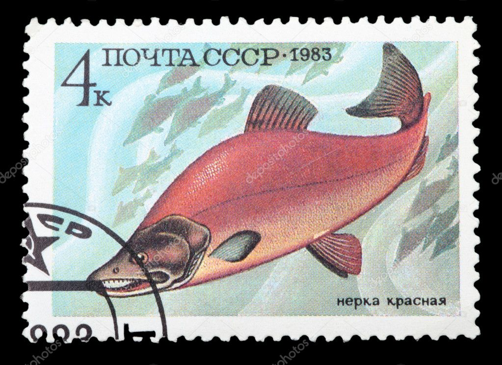 USSR - CIRCA 1983: A stamp printed in the USSR shows Sockeye salmon - Oncorhynchus nerka, circa 1983  Stock Photo #8333652