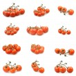Set of tomatoes - Stock Photo