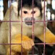 Monkey zoo laboratory cage - Stock Photo