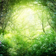 Sun in deep forest - Stock Photo