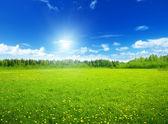 Champ de fleurs printanières et du ciel parfait — Photo