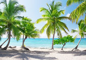 Catalina island in Dominican republic — Stock Photo