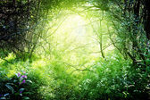 Sun in deep forest — Stock Photo