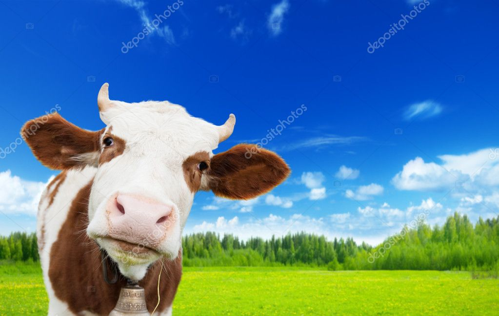 Cow and field of fresh grass — Stock Photo #10035840
