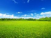 Campo de flores de primavera y cielo perfecto — Foto de Stock