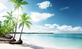 棕榈树和海 — 图库照片