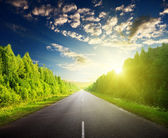 Road in Russian forest — Stock Photo