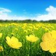 Field of spring flowers — Stock Photo #10281994