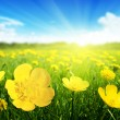 Field of spring flowers — Stock Photo #10282006