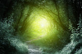 Way in deep forest — Stock Photo