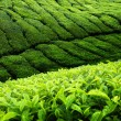 Stock Photo: Tea plantation Cameron highlands, Malaysia