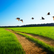 Birds and road — Stock Photo