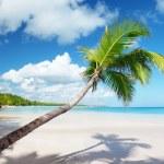 Palm and sea — Stock Photo