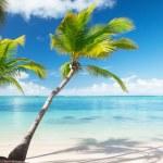Palms and sea — Stock Photo