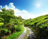 Road and tea plantation Cameron highlands, Malaysia — Stock Photo