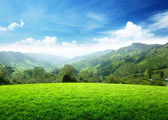 Field of spring grass and mountain — Foto Stock