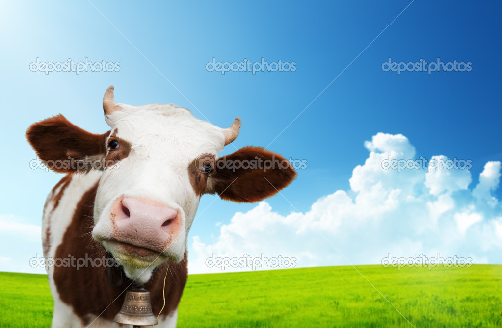 Cow and field of fresh grass — Stock Photo #8444528