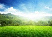 Campo de grama de primavera e montanha — Foto Stock