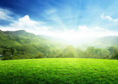 Champ d'herbe et de la montagne — Photo