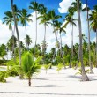 Stock Photo: Coconuts palm on beach