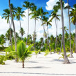 Coconuts palm on the beach - Stock Photo