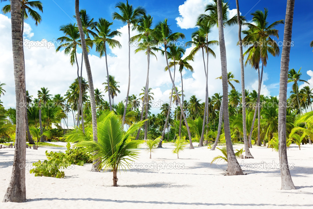 Coconuts palm on the beach — Stock Photo #8669913