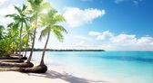 Palms and sea — Stockfoto