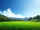 Gebied van voorjaar gras en berg — Stockfoto