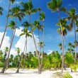 Coconuts palm on the beach - Stockfoto