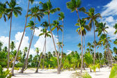 Coconuts palm on the beach — Stock Photo