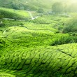 Teplantation Cameron highlands, Malaysia — Stock Photo #9013146