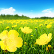 Field of spring flowers — Stock Photo