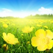 Field of spring flowers — Stock Photo #9231518