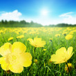 Field of spring flowers — Stock Photo #9967014